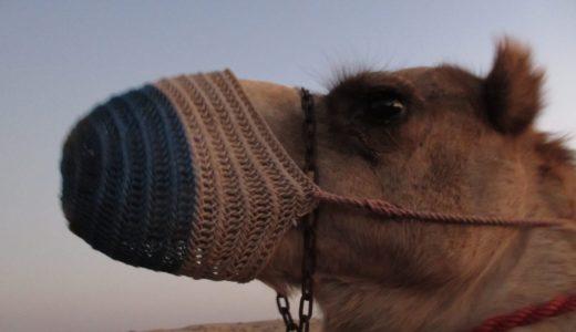 中東はおもしろい!独特なコーヒー文化に迫る【冒険旅行記】